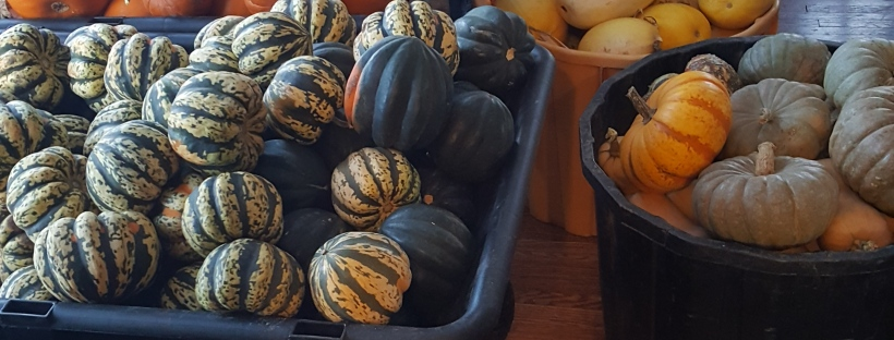 Yellow, orange and green squash and pumpkins of all sizes.